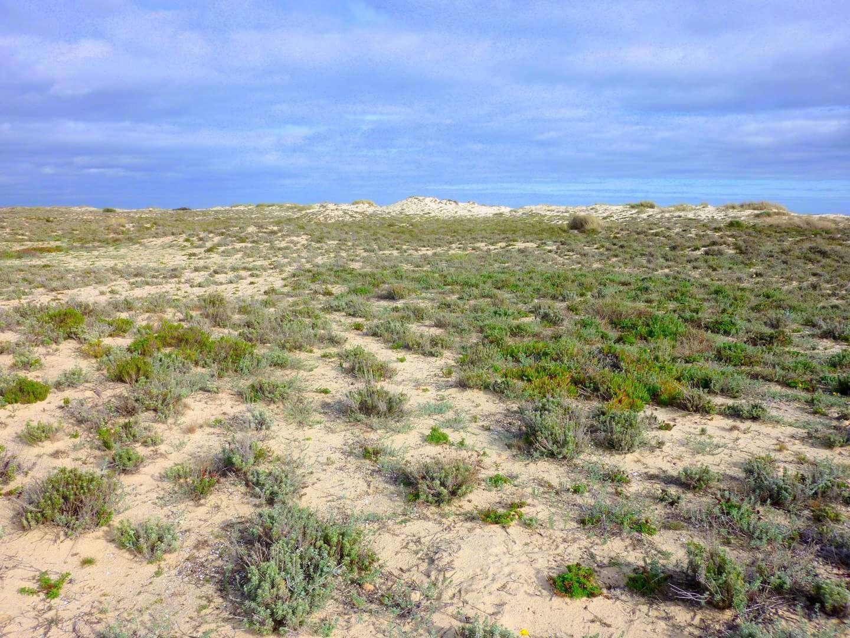 Tavira Strände: Praia do Barril
