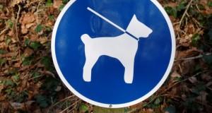 Algarve-Urlaub-Hund Anreise-Einreise-Foto Dieter Schütz_pixelio