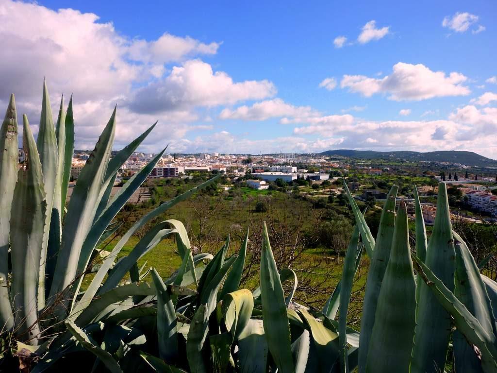 Algarve im März Loule