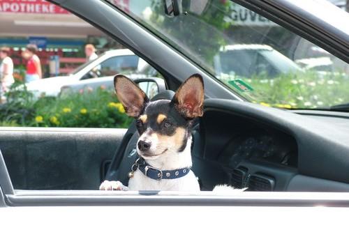 Anreise-Algarve: Autofahren mit Hund