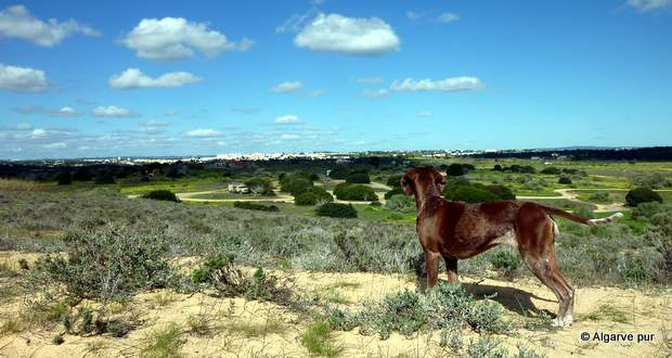 Praia Armacao de Pera: Ausblick auf grüne Wiesen hinter dem Strand