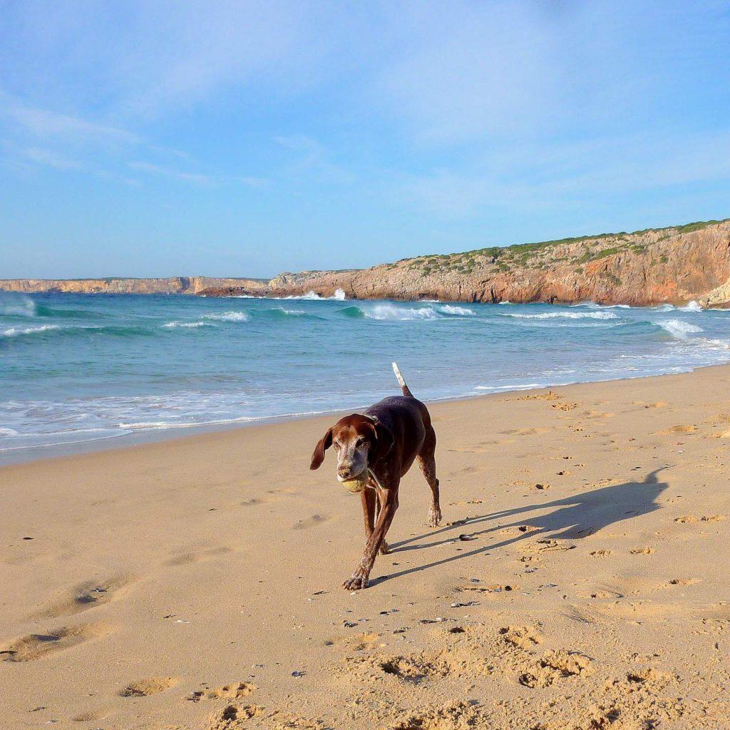 Algarve Urlaub mit Hund