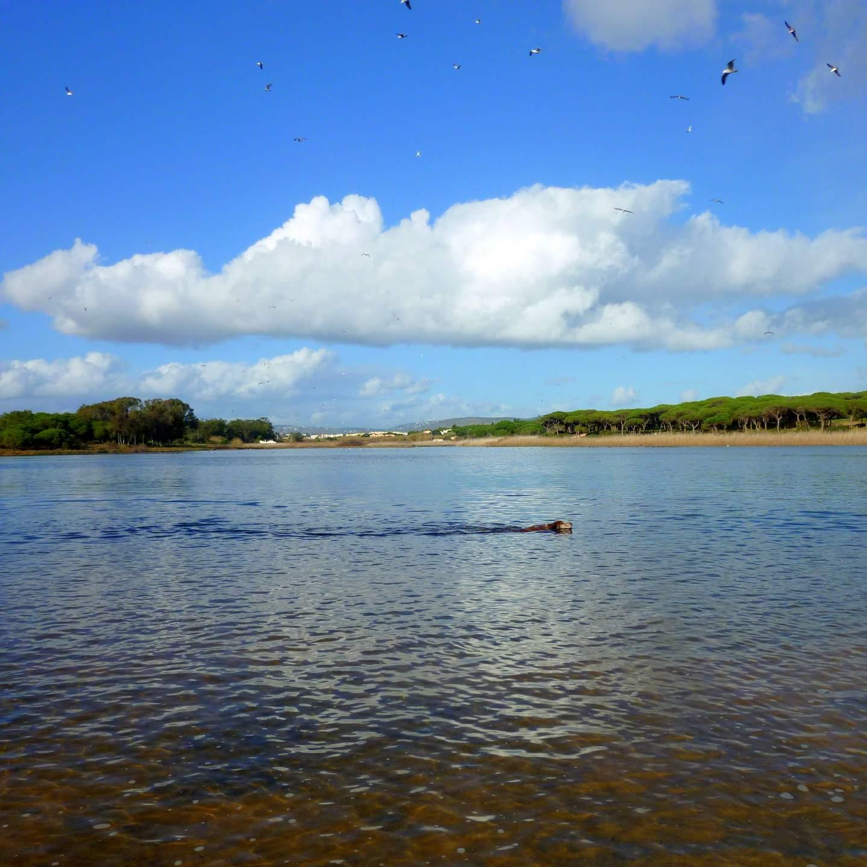 Quarteira Praia do Almargem