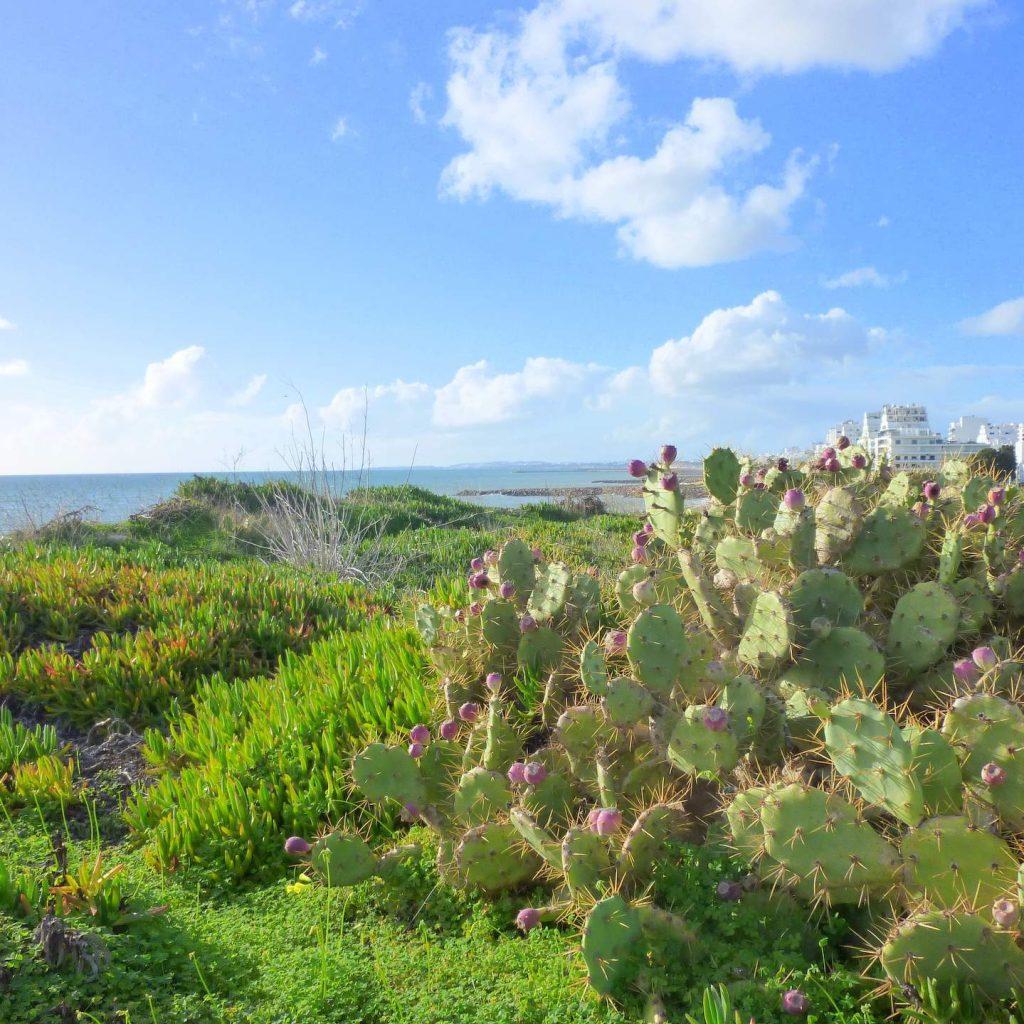 Urlaub in Quarteira, Algarve