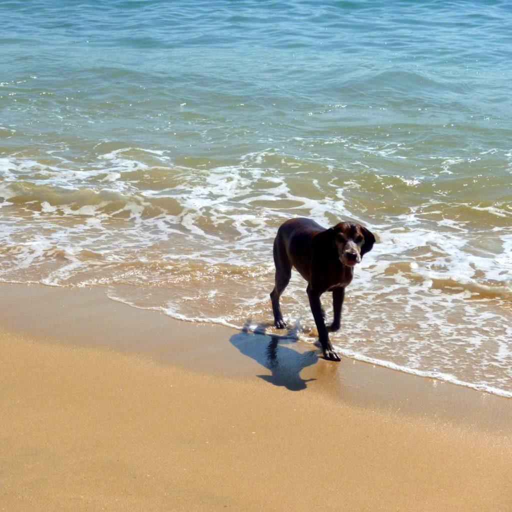Quarteria Urlaub mit Hund