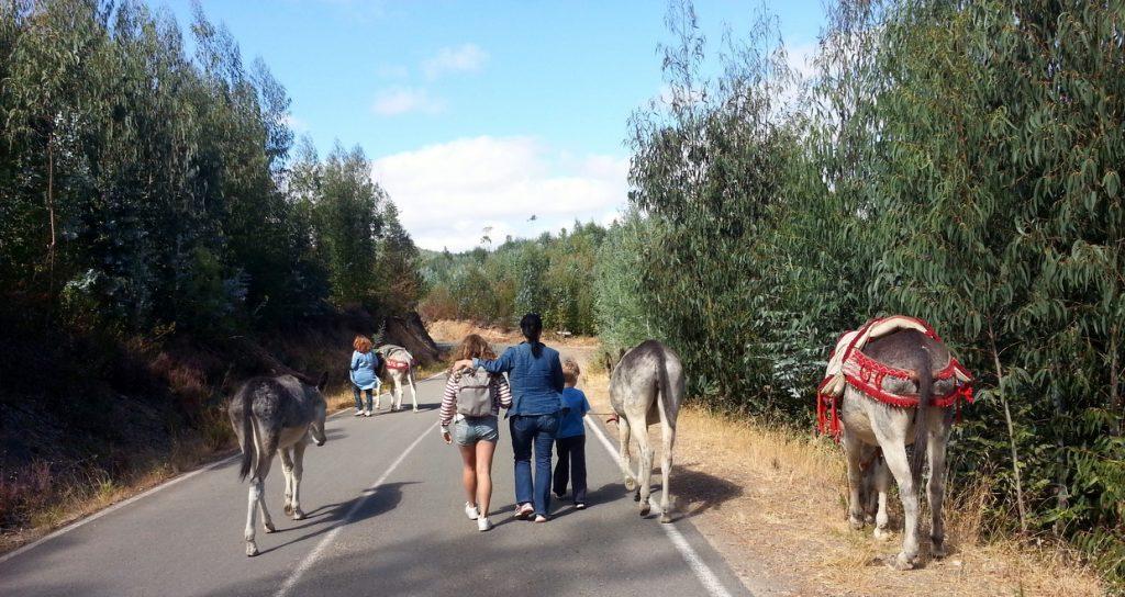 wandern mit Eseln Monchique