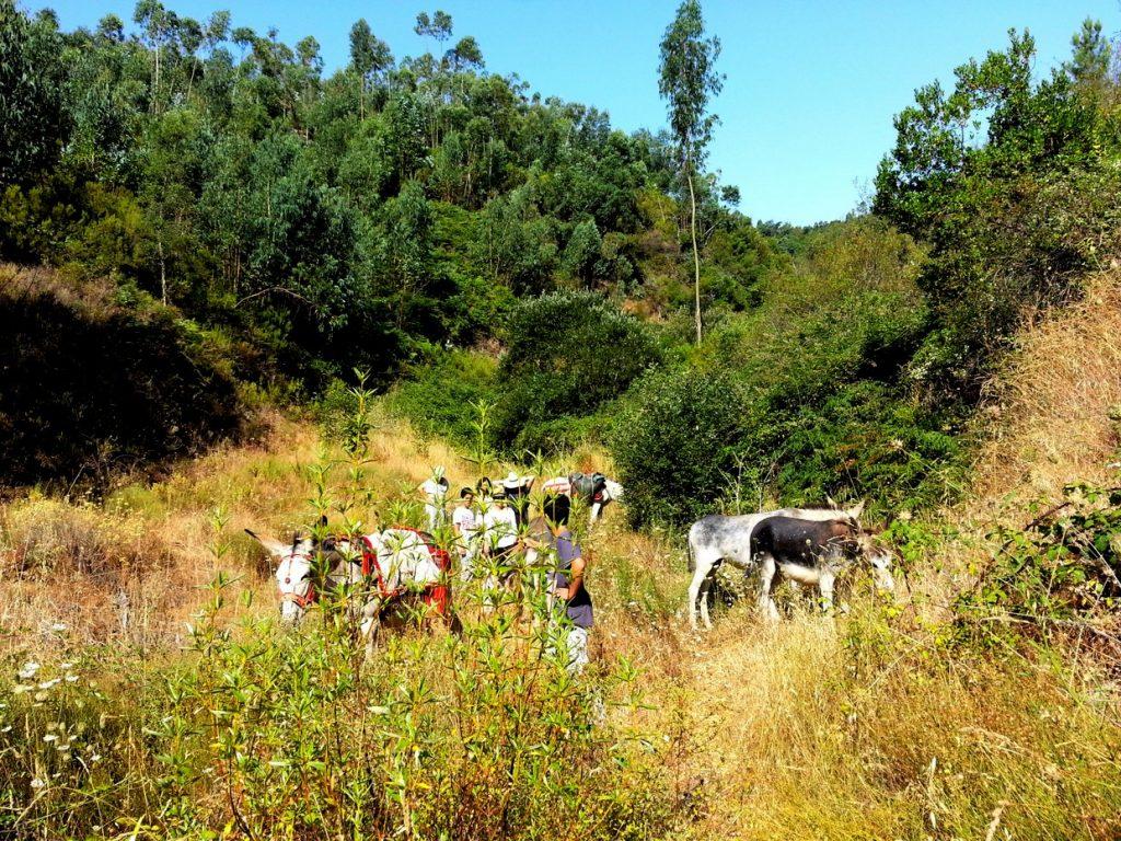 wandern mit Eseln