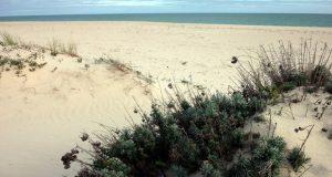 Urlaub am Strand Praia do Barril, Ilha de Tavira, Tavira, Sand-Algarve, Algarve, Portugal