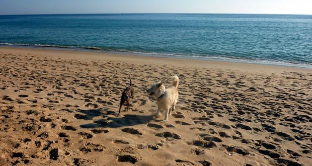 Urlaub mit Hund in Quarteira, Algarve, Portugal